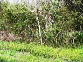 Property in Evensville, TN thumbnail 6