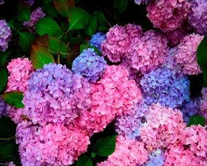 Everything's Coming Up Roses: 10 Popular Spring Flowers image 6