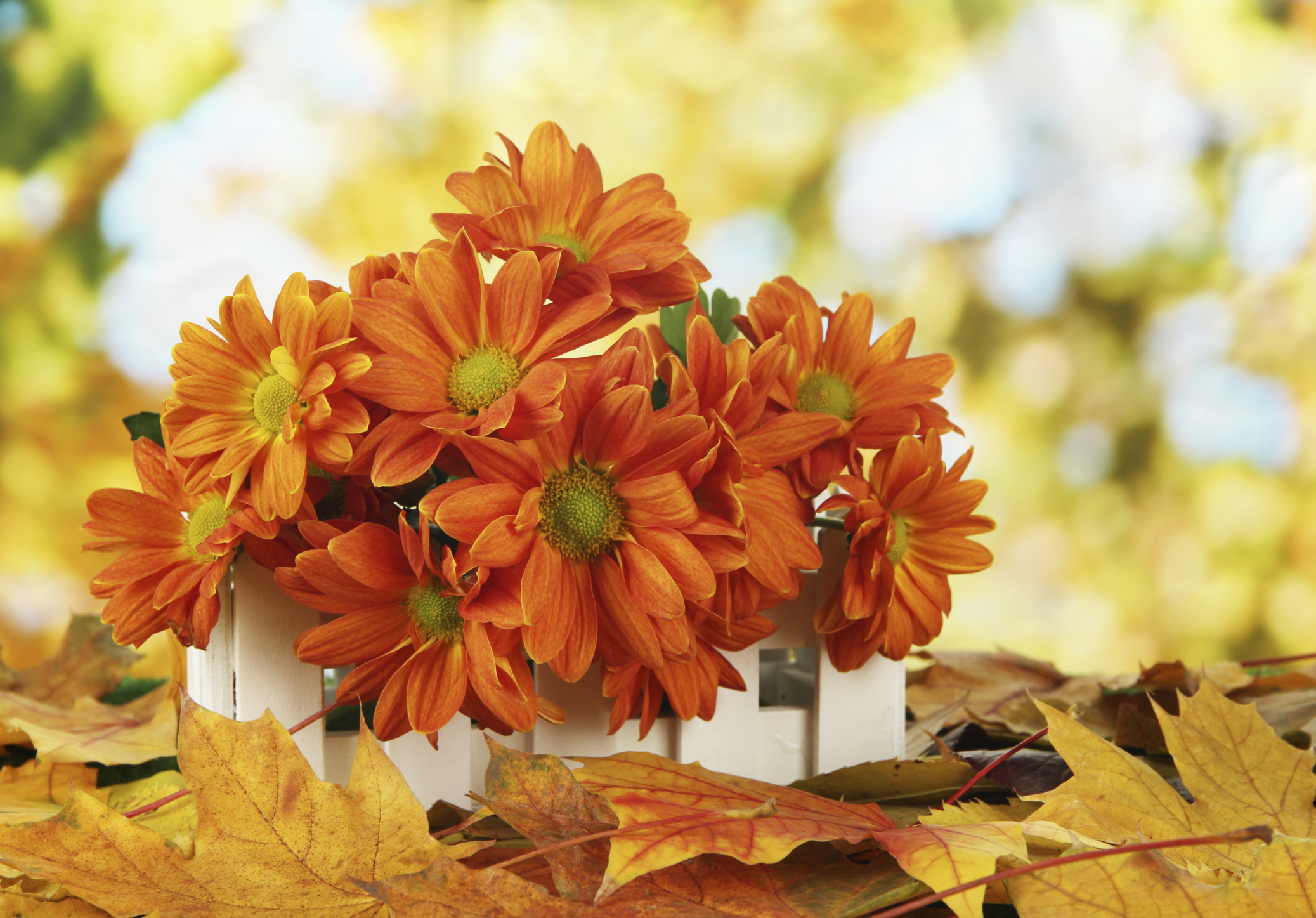 Fall Flowers: 5 Flowers to Plant this Fall