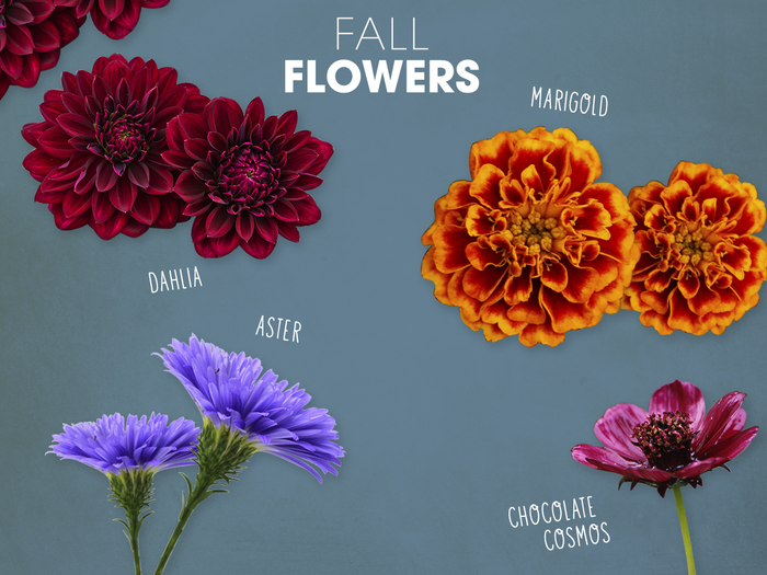Fall Flowers: 5 Flowers to Plant this Fall image 1