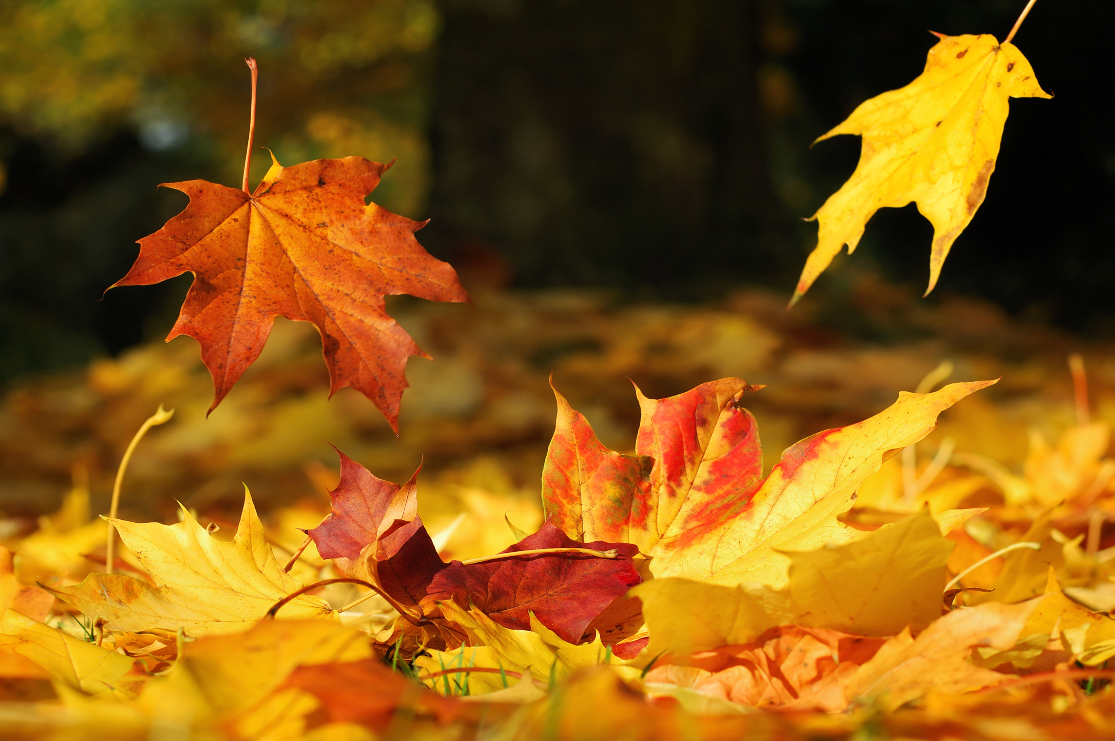 3 Things to Do With an Abundance of Autumn Leaves