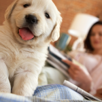 Puppy Love: How to Puppy Proof Your Home