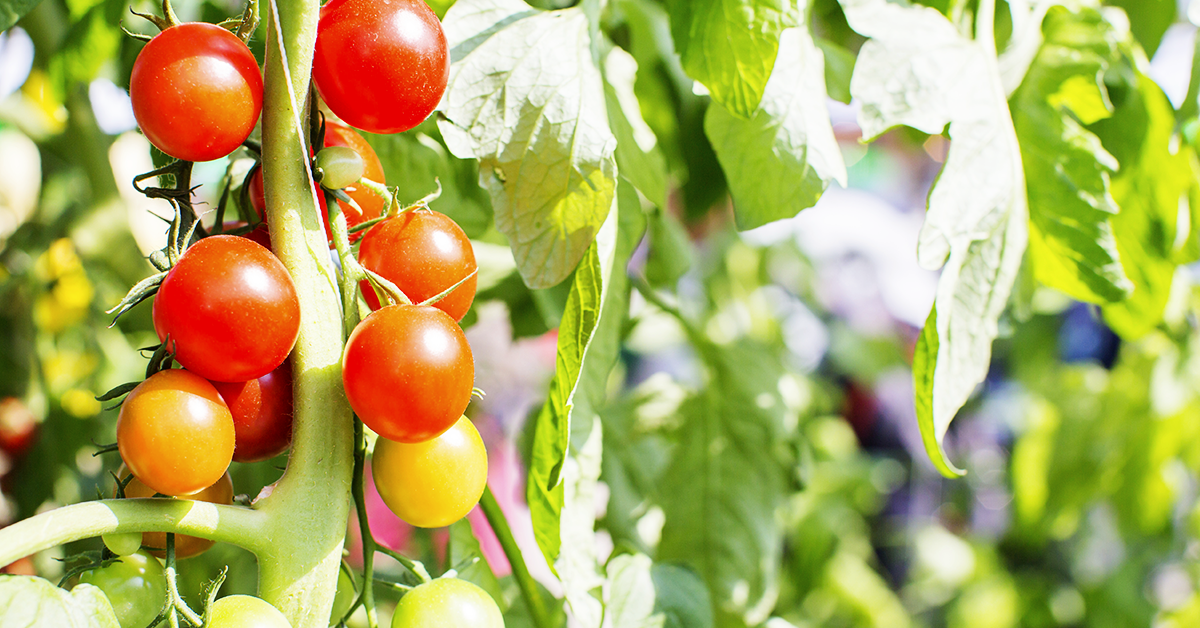Tips for Growing Fruits and Vegetables at Home