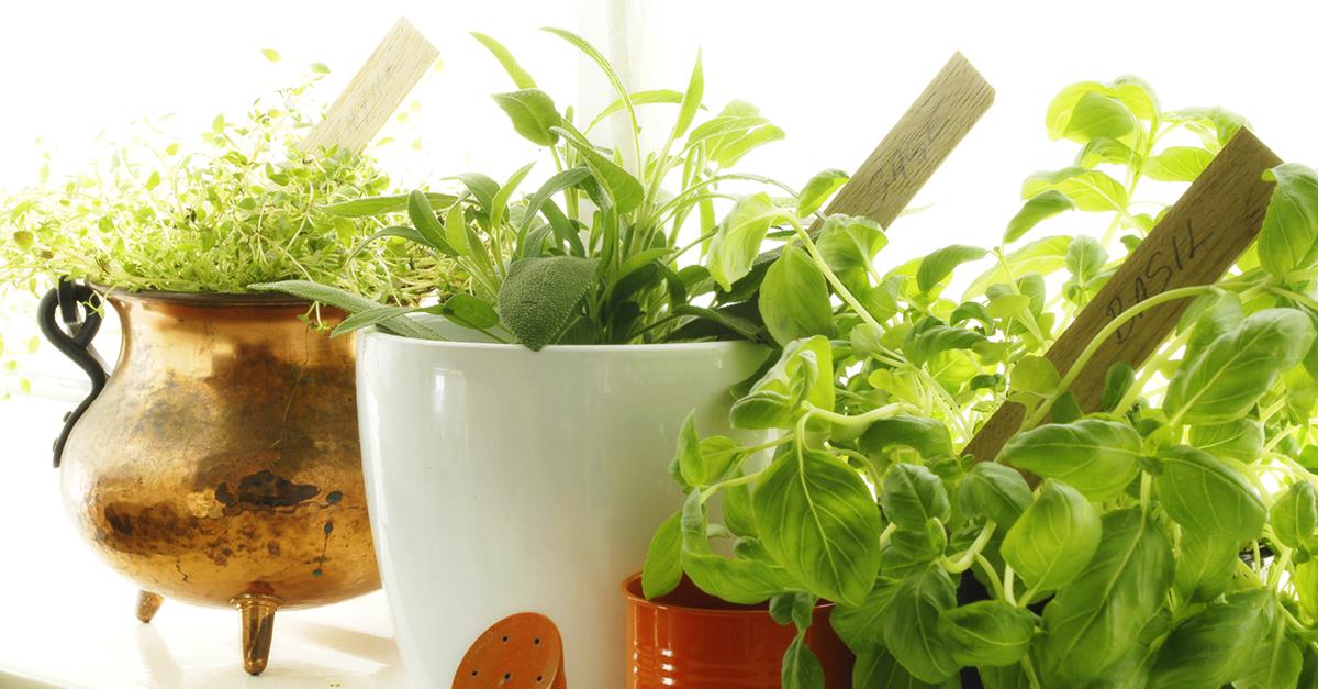 Here's How to Grow a Garden Indoors